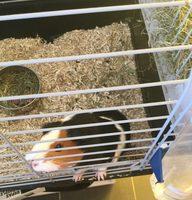 Hamiform - Repas Complet Optima Pour Cochon D'inde - 900G - Informations nutritionnelles